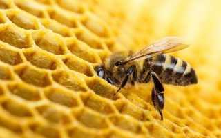 Осенние работы пчеловода: ревизия, подкормка, обработка, утепление