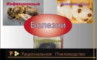 Заболевания пчел: симптомы и лечение