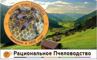 Пчелиная порода Карника характеристика и происхождение