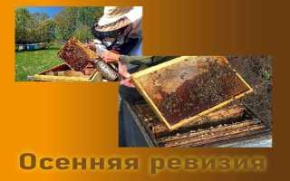 Сборка пчелиных гнезд на зиму