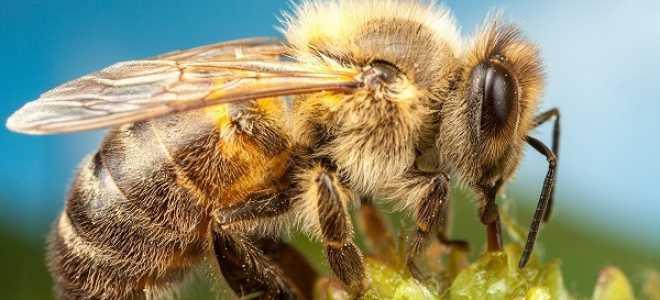 Заметки о пчеловодах