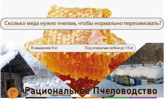 Сколько меда нужно пчелам, чтобы спокойно перезимовать?