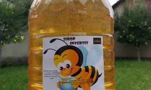 Сироп для пчел: правила и способы приготовления