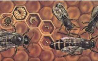 Биология пчел