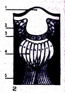 схема строение простого глаза пчелы