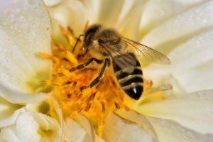пчелы обладают контактным обонянием