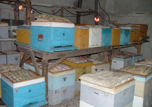 зимовка пчел в подвале