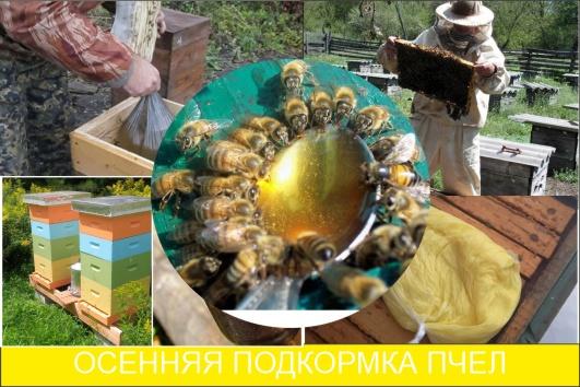 осенняя подкормка пчел