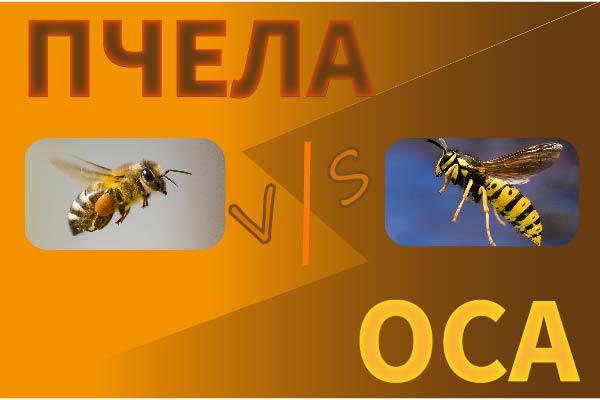 Пчела и Оса сравнение