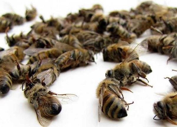 погибшие насекомые