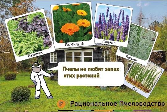 эти растения отпугивают пчел